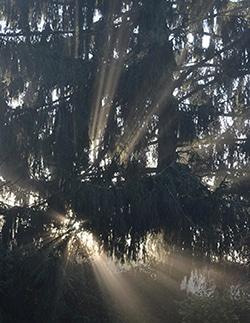 Mystische Baumkreiserscheinung